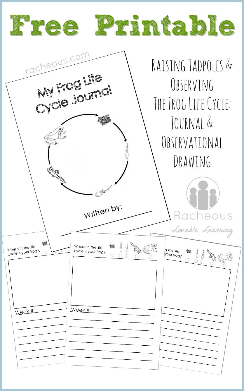 836x1336 Free Printable Frog Life Cycle Journal Frog Life Cycles