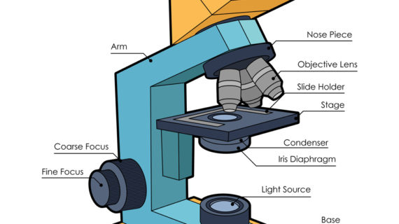 570x320 Microscope Drawing With Parts 5 Best Images Of Light Microscope