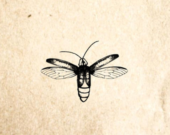 340x270 Firefly Rubber Stamp Etsy