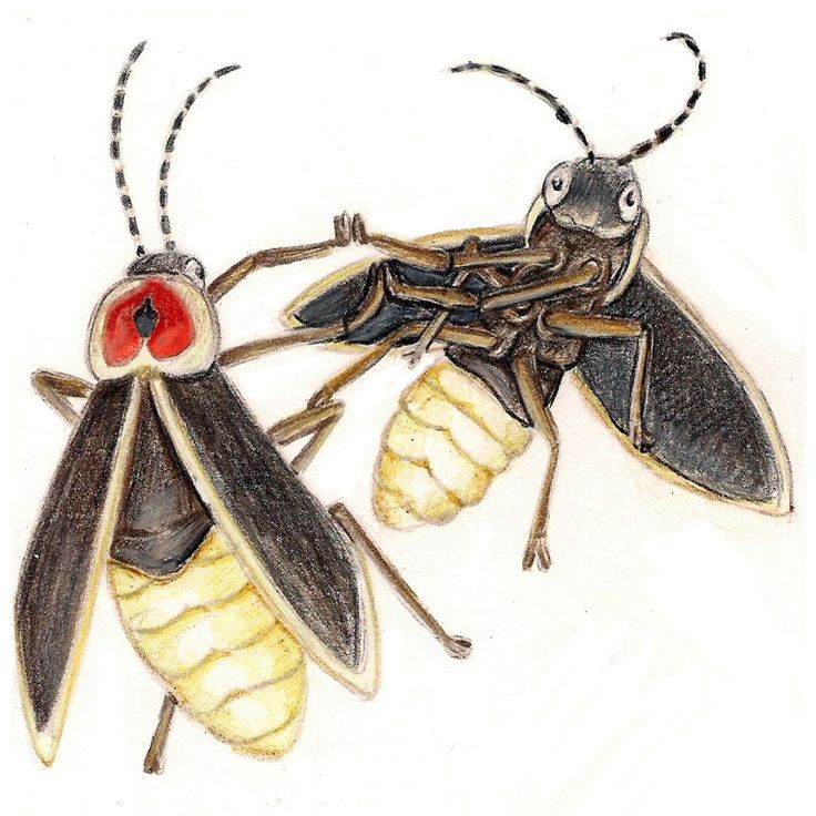 736x736 Image Result For Lightning Bug Drawing Halloween Costumes