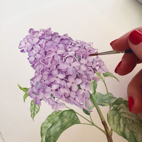 474x474 Lilac Botanical Illustration With Watercolor Tutorials