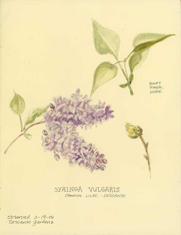 600x776 Spring Lilacs Challenge 59