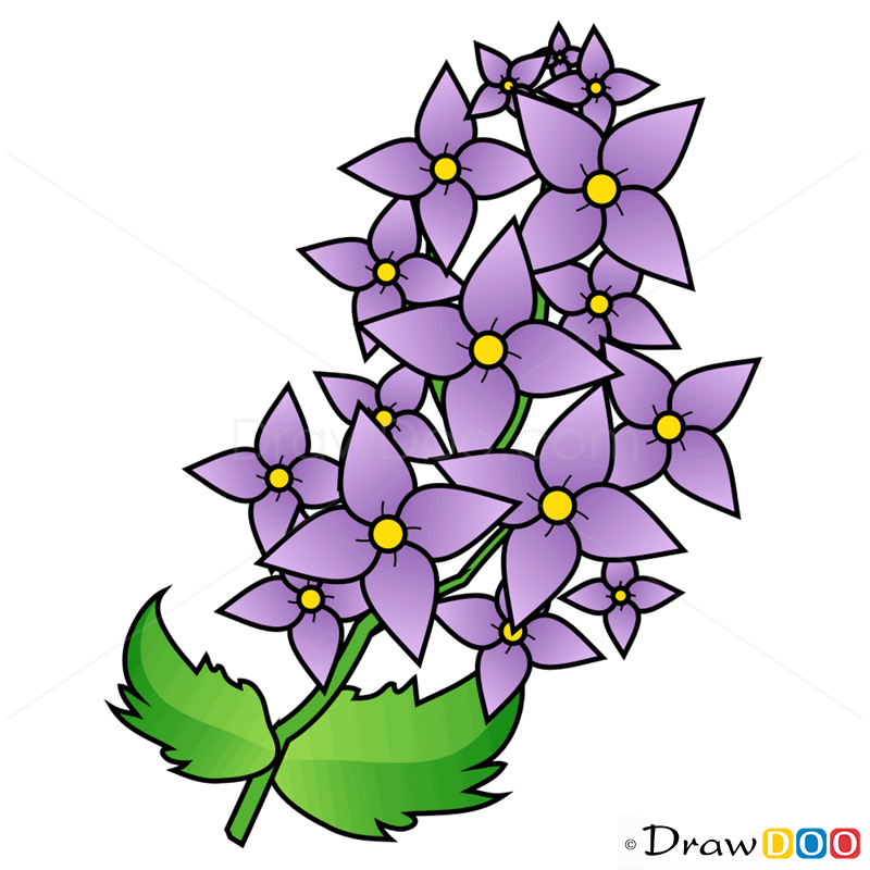 800x800 How To Draw Lilac, Flowers