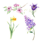160x160 Spring Flower, Twig Purple Lilac. Watercolor Floral Background