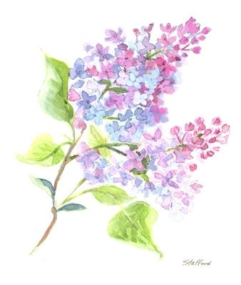 338x400 Thinking My Next Tattoo Will Be Innerrm Lilac. I Need To Find