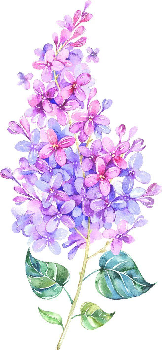 658x1415 Best Lilac Tattoo Ideas