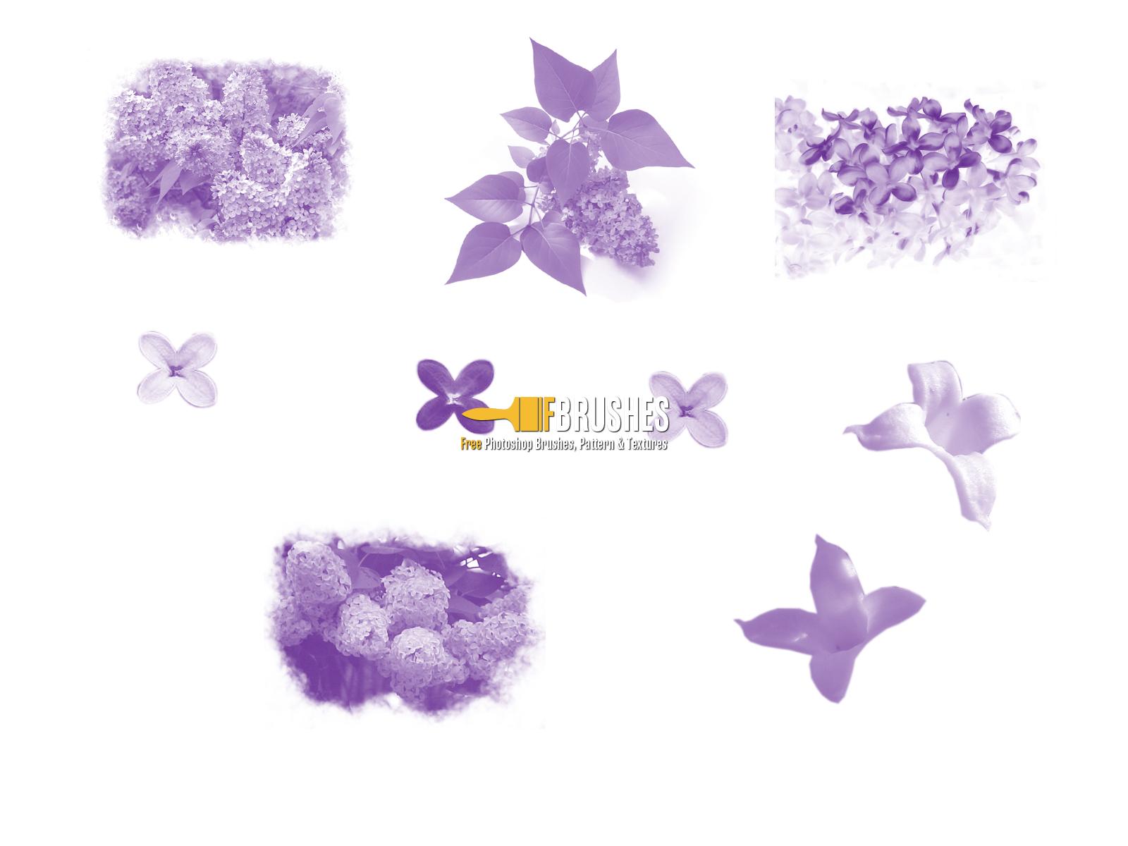 1600x1200 Lilac Flowers