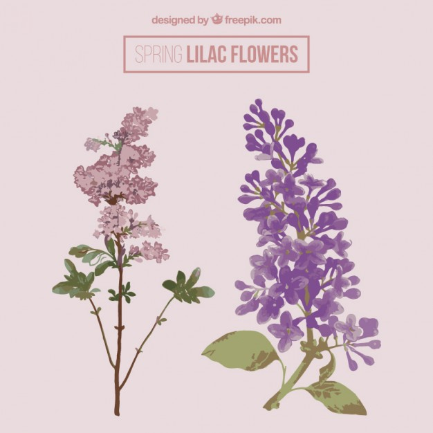 626x626 Lilac Vectors, Photos And Psd Files Free Download