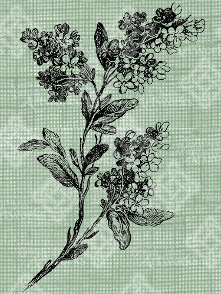 432x576 Digital Download Vintage Lilacs Branch Digi Stamp Digis
