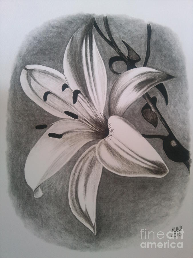 675x900 Lily Drawing By Kathryn Sharkey