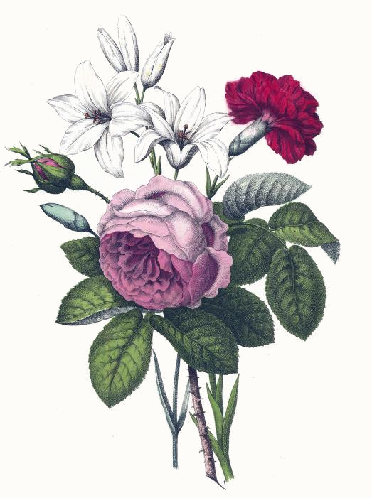 523x701 Rose, Carnation Amp Lilies Drawing