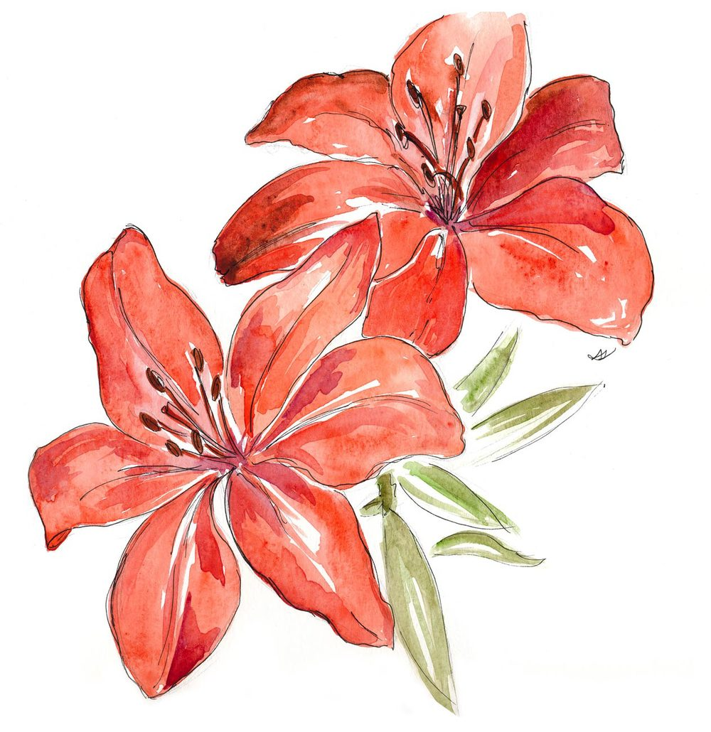 1000x1030 Watercolor Lilies Drawing Sarah