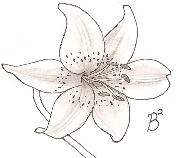 600x522 Lily Flowers Drawings White Lily By Shazwald {Embroidery