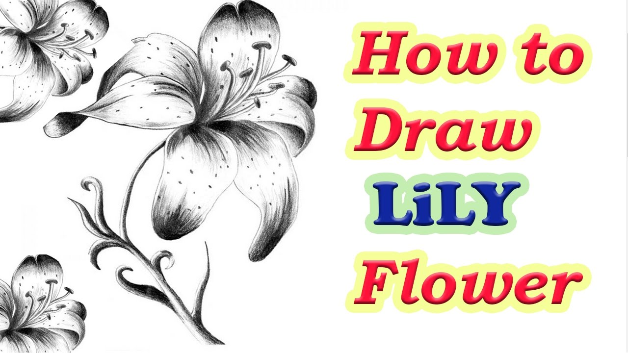 1280x720 How To Draw Lily Flower Step By Step How To Draw A Flower