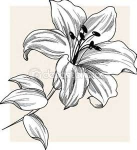 274x300 How To Draw A Star Lily