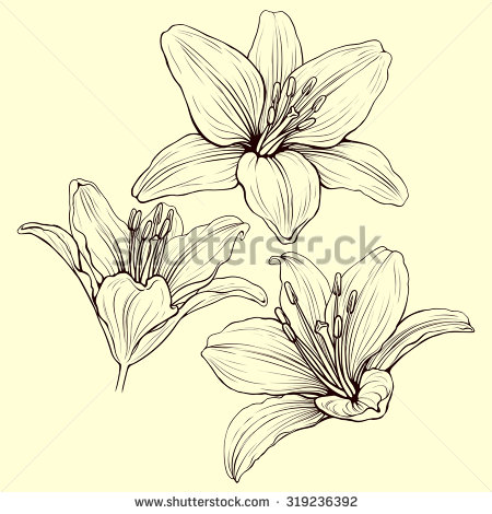 450x470 Stock Vector Three Line Lily Flowers In Ink Style Drawing