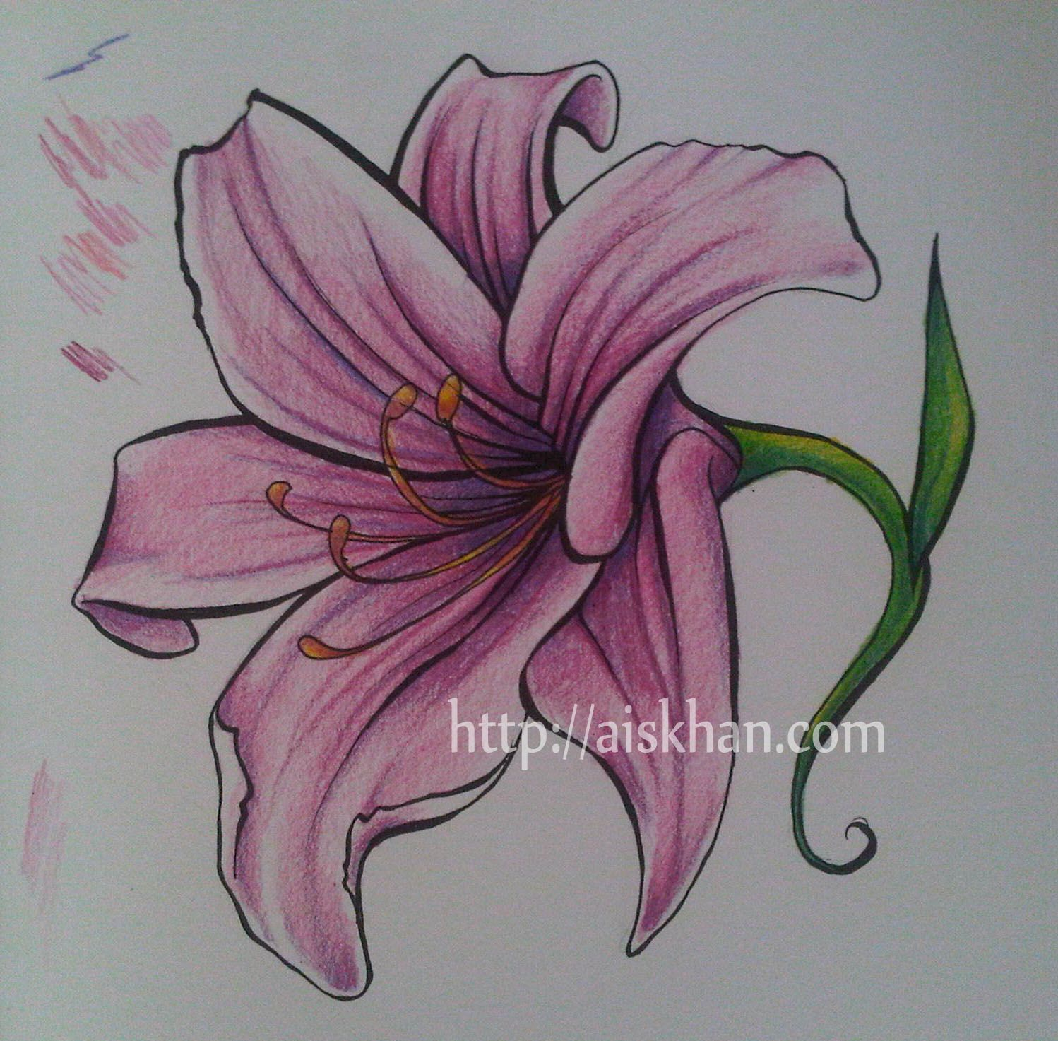 1498x1473 Gallery Lily Flower Sketches,