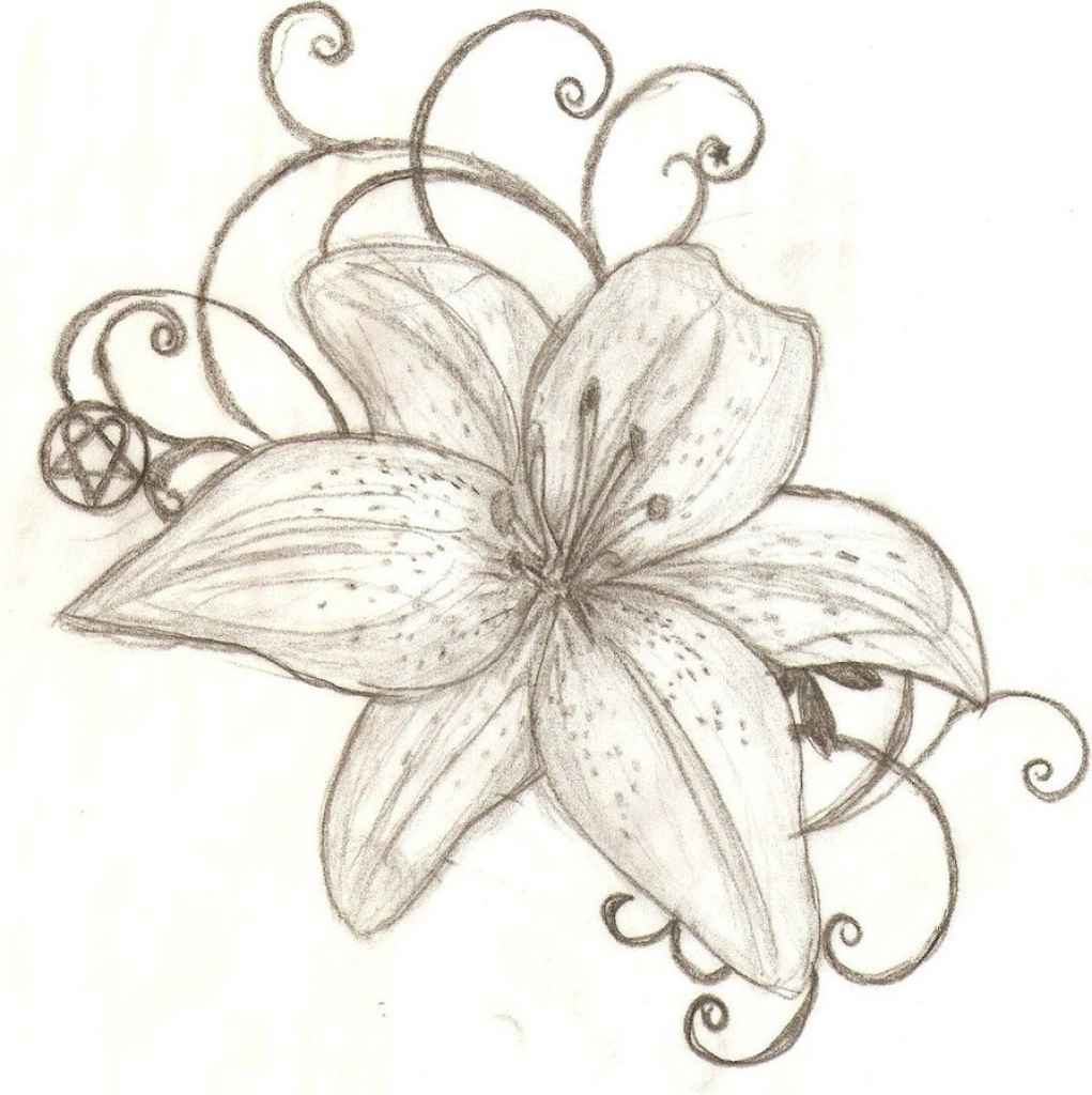 It's just an image of Divine Tiger Lily Flower Drawing