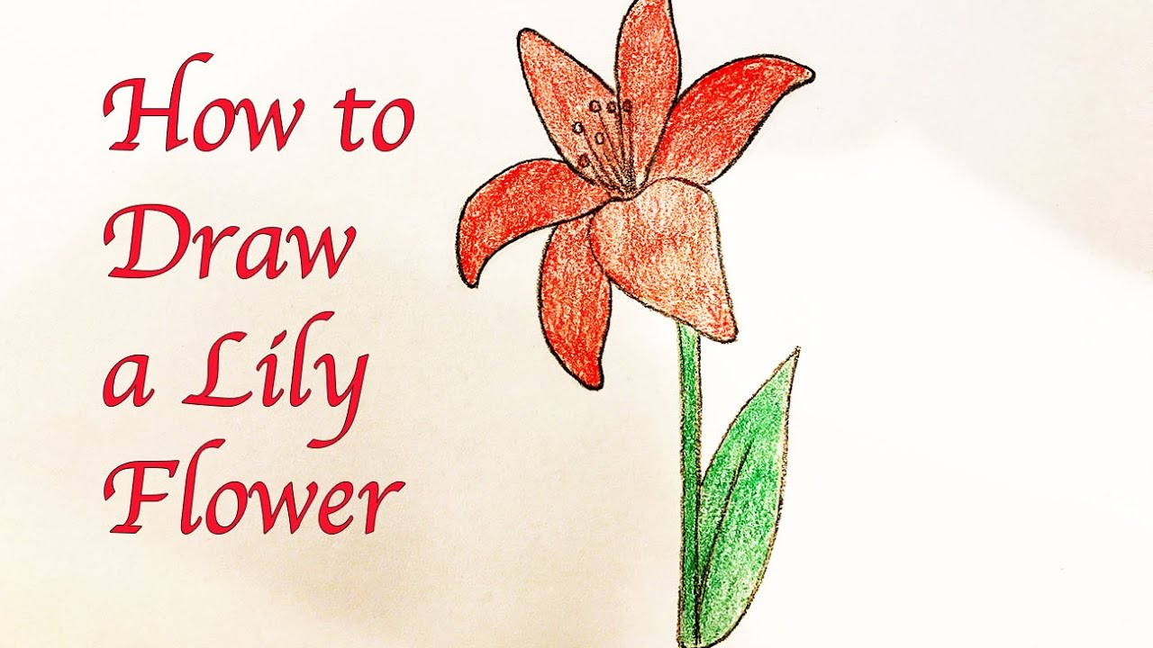 1280x720 Drawing For Kids How To Draw A Lily