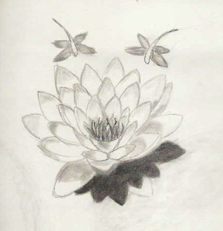 Pisces Flower Water Lily Flowers Healthy
