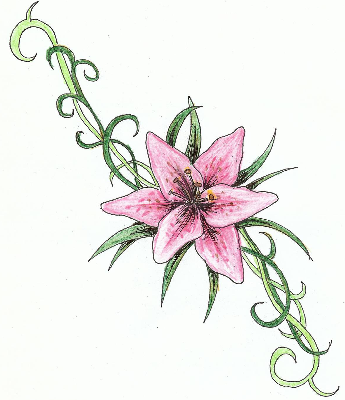 Lily drawing tattoo at getdrawings free for personal use lily 1175x1362 lily flower tattoo drawing izmirmasajfo