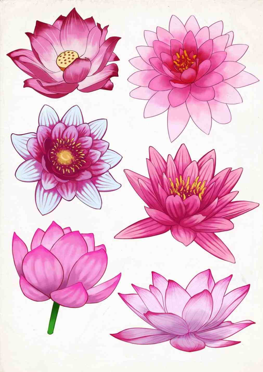 Lily drawing tattoo at getdrawings free for personal use lily 1011x1430 water lily tattoo designs izmirmasajfo