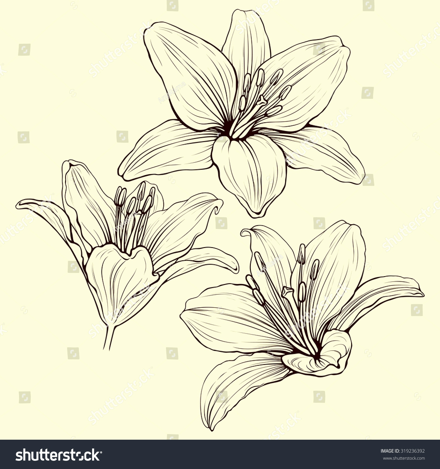 1500x1600 12 Best Of Flower Drawing Lily