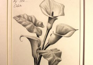 300x210 Calla Lily Flower Drawing