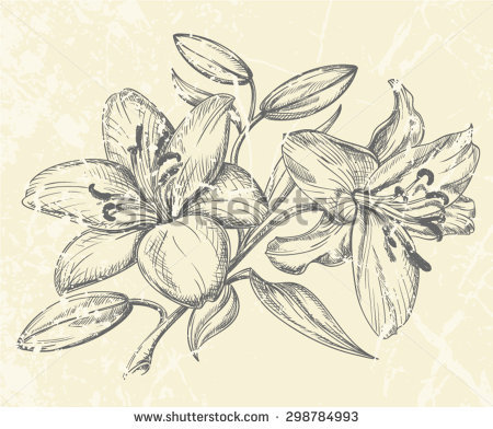 450x392 Drawn Lily Flower Leave