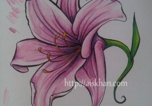 300x210 Lily Flower Drawing