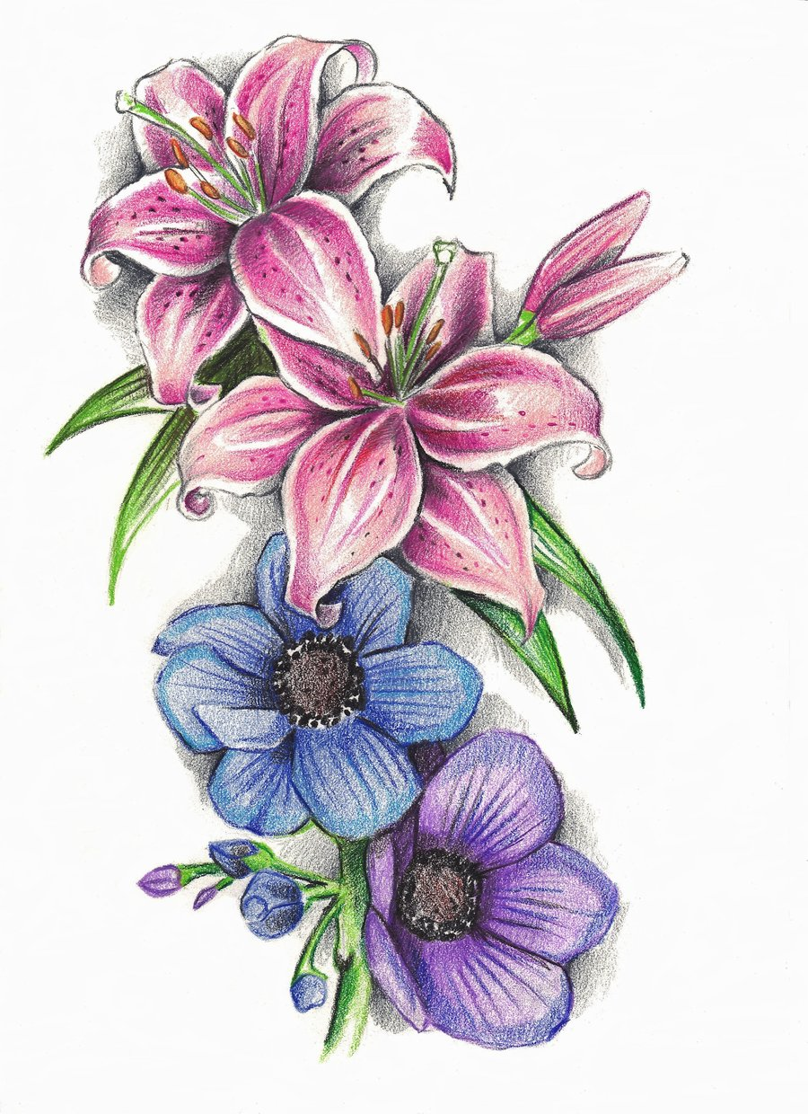Lily flower tattoo drawing at getdrawings free for personal 900x1240 stargazer lilly39s and anemone flowers by phantomphreaqiantart izmirmasajfo