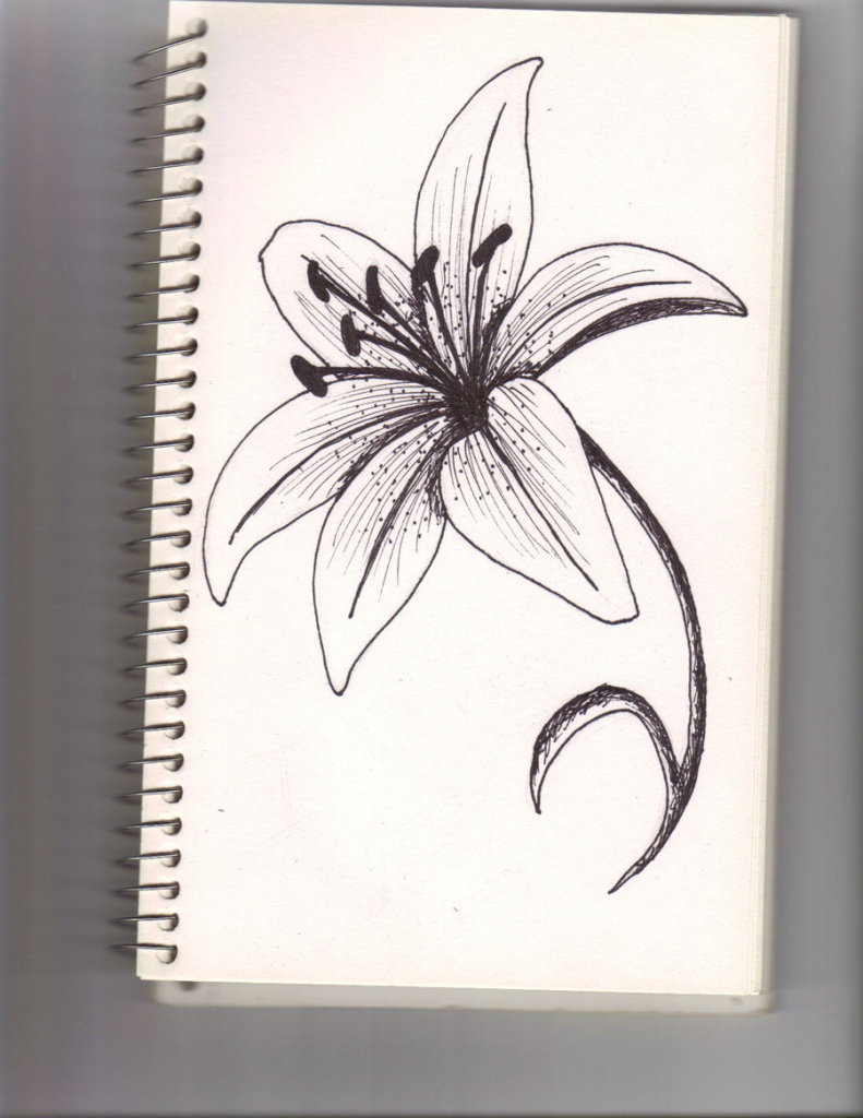 791x1024 Drawing Of A Lily Flower