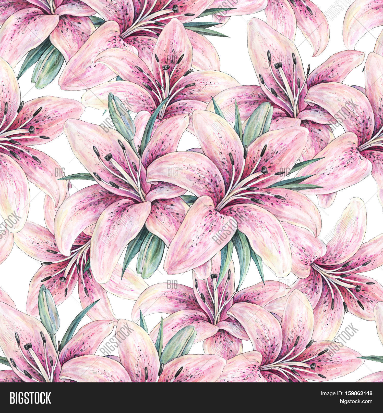 1500x1620 Pink Lily Flowers Isolated On White Image Amp Photo Bigstock