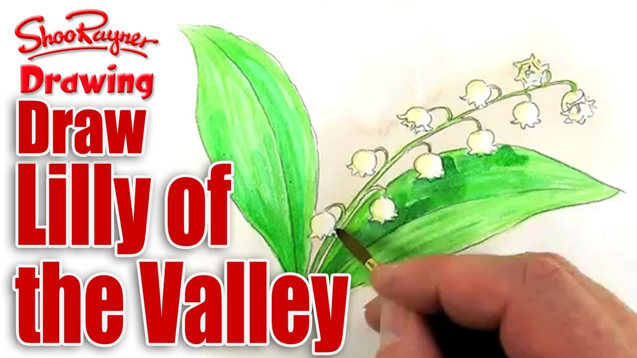 Lily of the valley drawing at getdrawings free for personal 1280x720 how to draw and paint lily of the valley izmirmasajfo