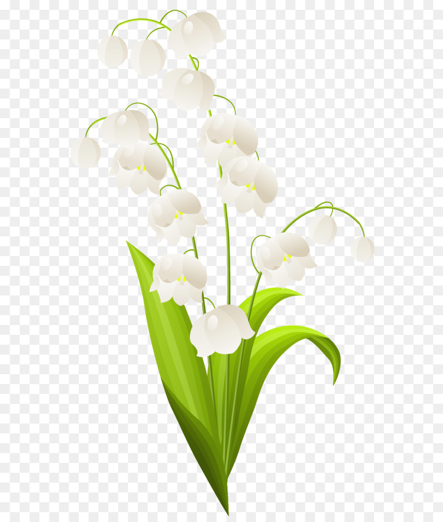 Lily Of The Valley Flower Drawing At Getdrawings Free For