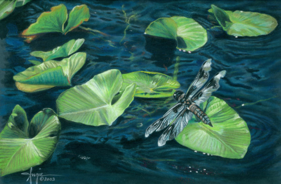 900x589 Lily Pad Landing Drawing By Angie Okamoto Ong