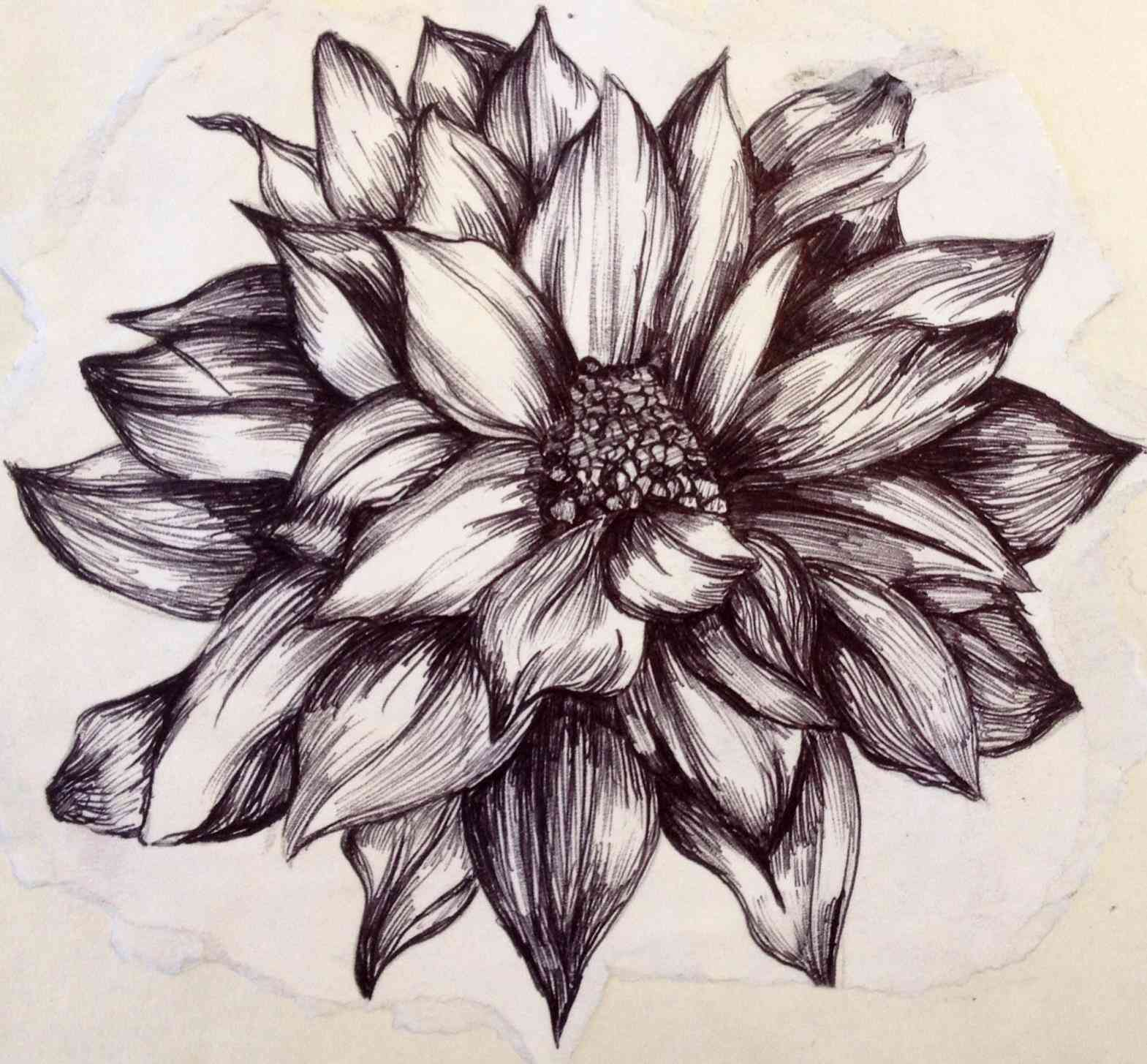 1569x1455 Realistic Lily Pad Drawing Bdarop Decors