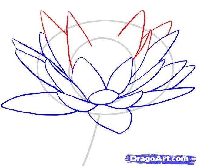 650x549 Step By Step Lotus Flower Drawing Drawn Lotus Lily Pad Flower