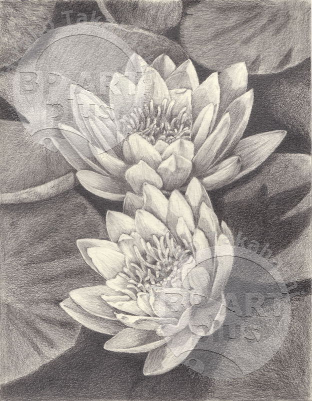 624x800 Water Lily Pencil Drawings Water Lily Drawings In Pencil