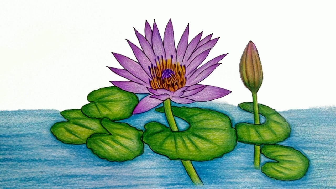 1280x720 How To Draw Water Lily Step By Step (Very Easy) Water Lily