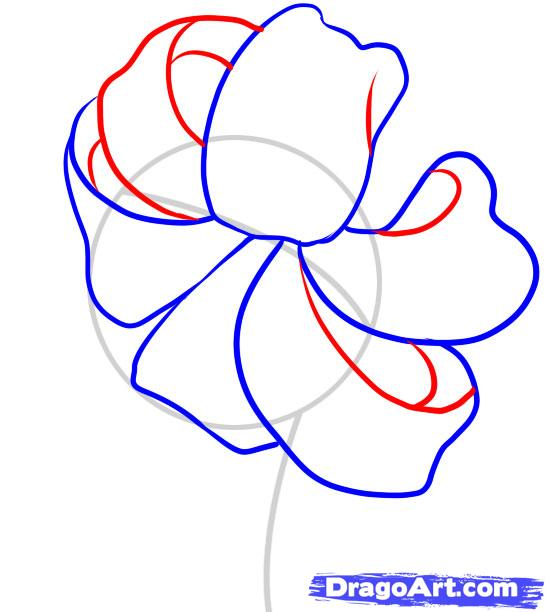 546x612 How To Draw A Tiger Lily Step 3 Writing Drawing