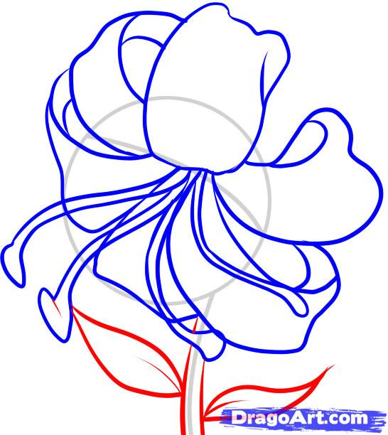 546x612 How To Draw A Tiger Lily Step 5 Art Ideas Tigers