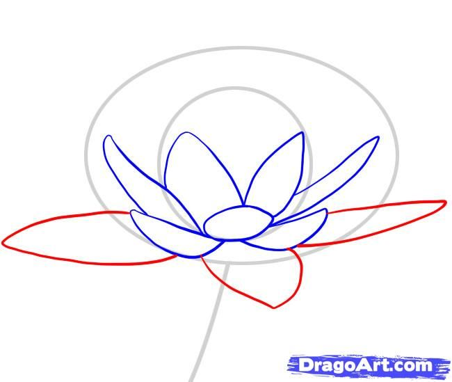 650x549 How To Draw A Water Lily Step 3 Bobbin Lace Water