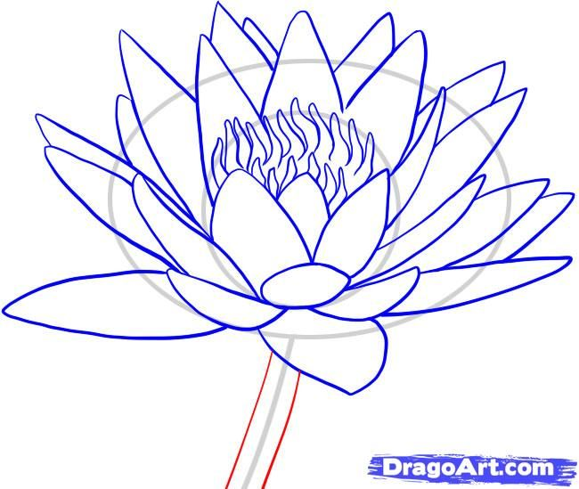 650x549 How To Draw A Water Lily Step 8 Drawing Tips Water