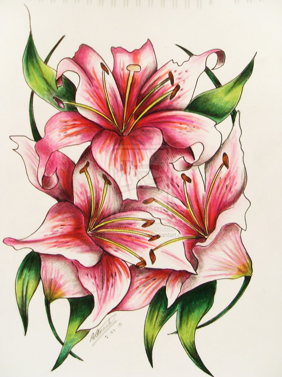 Lily Tattoo Drawing At Getdrawings Free For Personal Use Lily