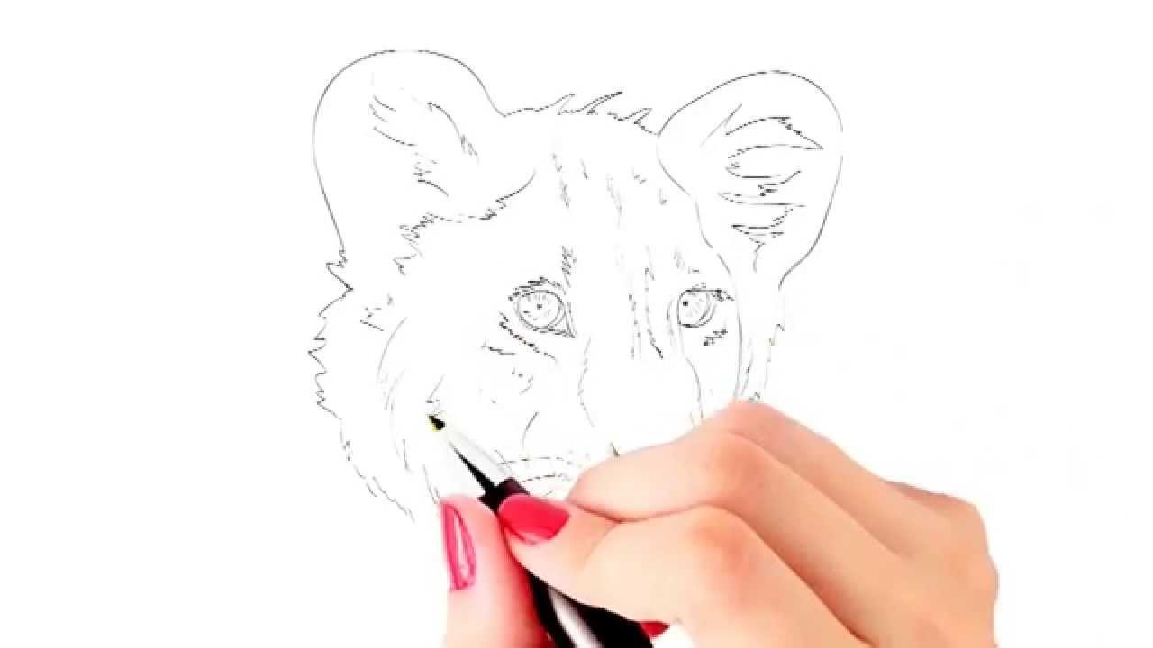 1280x720 How To Draw A Baby Lion Or Lion Cub Face Yzarts Yzarts