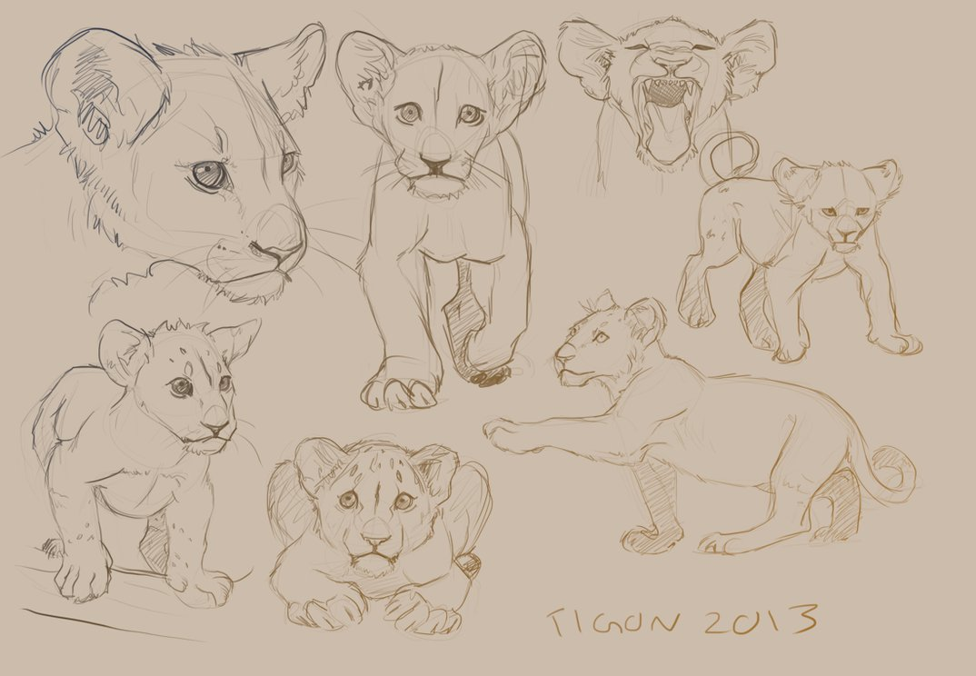 1074x744 Lion Cub Studies By Tigon