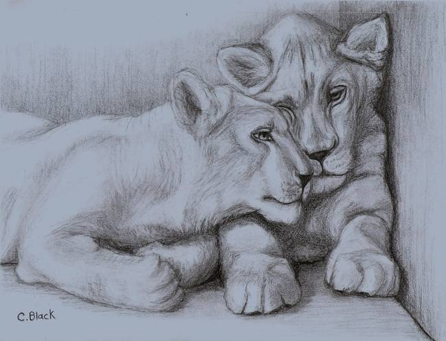 650x498 Stunning Lion Cub Drawings And Illustrations For Sale On Fine