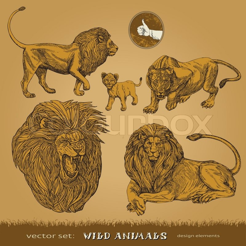 800x800 Eps10, Hand Drawn Wild Animals Vector Set Lions, A Lioness