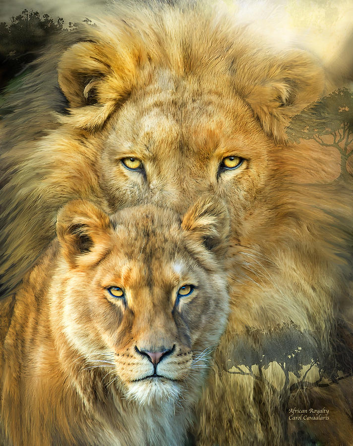 712x900 Lion And Lioness African Royalty Mixed Media By Carol Cavalaris